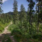 Wanderweg zur Bodenmaiser Mulde, Großer Arber