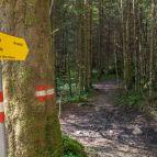 Brunnkogel - Abzweigung Schafluckensteig