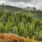 Auf dem Gipfelfelsen - Blick zum Steinfleckberg