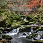Wolfsteiner Ohe - Hängebrücke bei Ringelai, Buchberger Leite (Naturpark Bayerischer Wald)