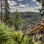 Aussichten am Großen Rachel (Nationalpark Bayerischer Wald)