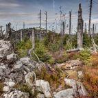 Am Hohen Filzberg, 1279m - Blick zum Lusen (Nationalpark Bayerischer Wald)