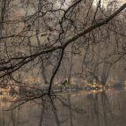Die Ilz bei der Schrottenbaummühle