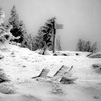 Lusengipfel im Winter (Nationalpark Bayerischer Wald)