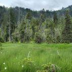 Eines der Rachelkare (Nationalpark Bayerischer Wald)