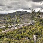 Am Steinfleckberg, Blick zum Lusen (Nationalpark Bayerischer Wald)