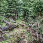 Am Hochwalddistriktsteig