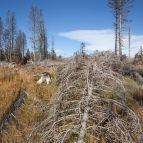 Totholzbereich am Hahnenbogen
