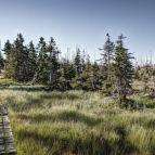 Grenzsteig am Lusen - Nationalpark Bayerischer Wald
