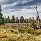 Lusenfilz (Nationalpark Bayerischer Wald)