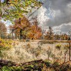 Kohlschachten - Nationalpark Bayerischer Wald