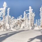 Winter - Nationalpark Bayerischer Wald