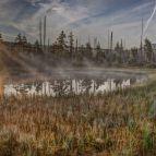 Tagesanbruch am Filz, Moorauge (Nationalpark Sumava)